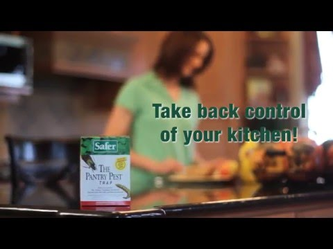 How to Get Rid of Moths with the Pantry Pest® Trap