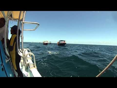 Isla Mujeres y snorkel con Tiburón Ballena en Holbox