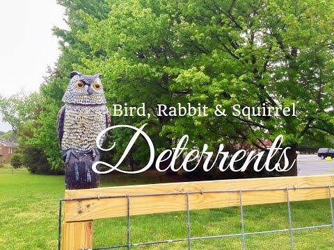 HD Bird, Rabbit & Squirrel Deterrents for your Vegetable Garden