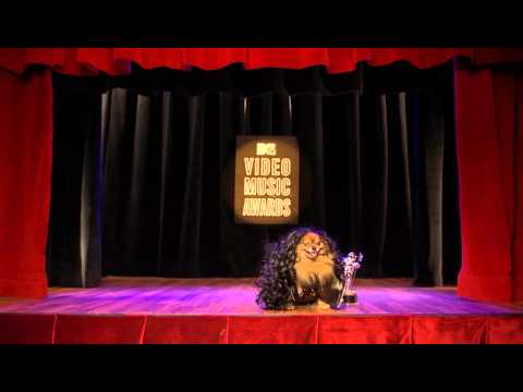 VMA: Lady Gaga The Meat Dress And Cher  [Cat Reenactment]