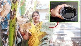 कैसी भी खांसी हो जड़ से दूर कर देगा ये आसान घरेलू उपाय। Indian Home Remedy for Cough