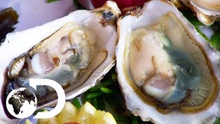 OYSTERS | How It