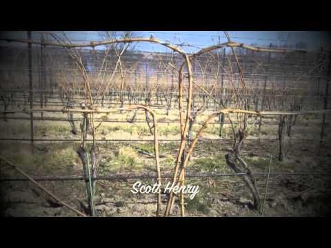 Vineyard Trellis Systems