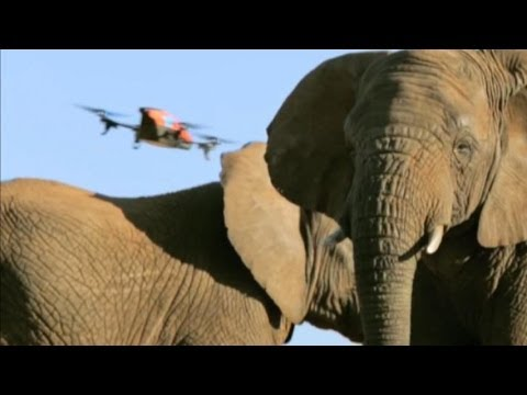 How Drones Save Elephants From Poachers