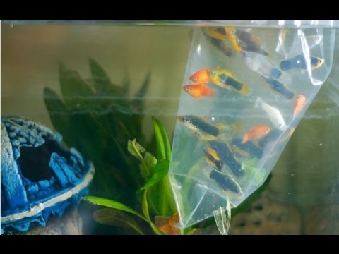 How to Add Fish to Your Aquarium