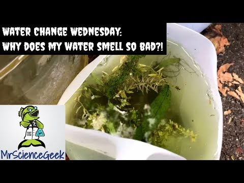 Water Change Wednesday: Why does my water smell so bad? Summer Tubbin' Outdoor Guppy Pond Updates