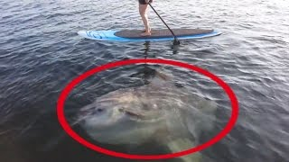 5 Giant Fish | Fishing Moments | Huge Fish Caught On Camera