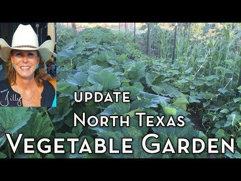 Vegetable Garden Update - Early June
