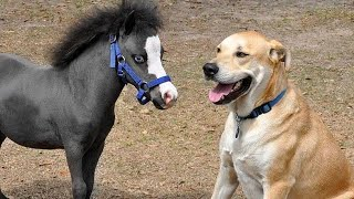 Funny HORSE VIDEOS will make you EXPLODE LAUGHING