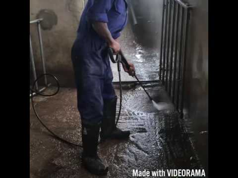 How to disinfect your pig pens