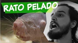 ESSE ANIMAL É INCRÍVEL! | Canal do Slow 40