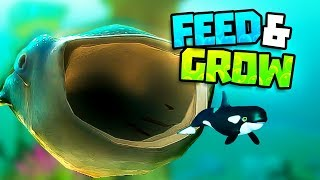 feed and grow fish free gameplay