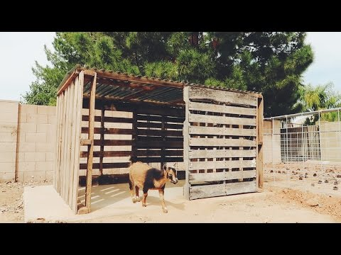 A Goat House made from FREE PALLETS!
