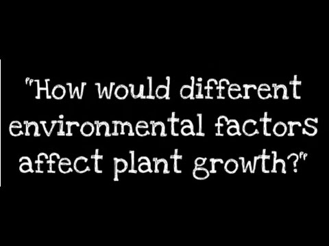 How would different environmental factors affect plant growth?