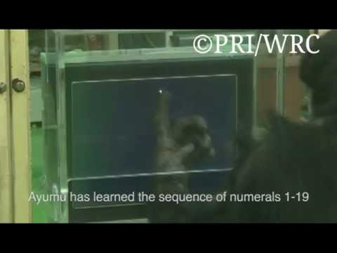 Symbolic representation and working memory in chimpanzees