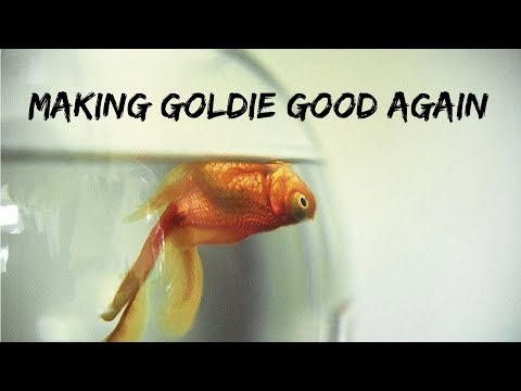 (WARNING) The Quest To Rescue Goldfish | Swim Bladder & Oranda Goldfish Wen Trim Surgeries