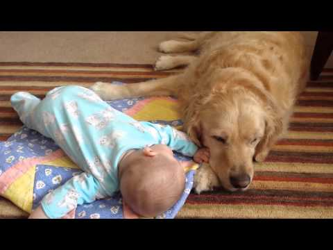 Golden Retriever Helps Infant with Tummy Time