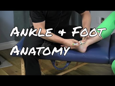 Anatomy of the Medial Ankle & Foot