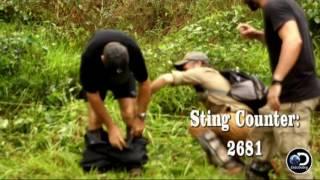 Download Bullet Ant Sting Compilation Video