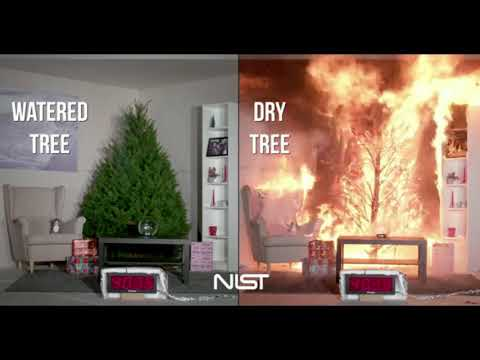 Water Your Christmas Tree | Don't Get Burned This Xmas!