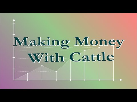 Making Money With Cattle
