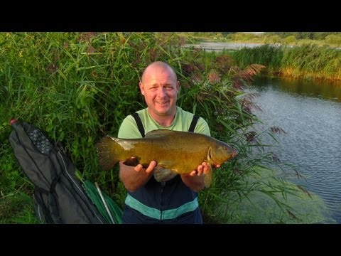Cygnet Pond Tench - Hard Fighting Fish (Hull & District Angling Association)