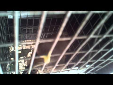WoodPecker removal Denver CO  Call EnviroCritter 720-295-7378