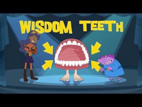 How Your Teeth Work