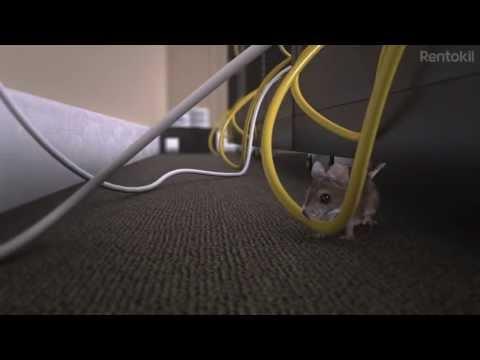How to Get Rid of Mice - RADAR by Rentokil