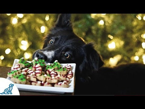 Christmas Cookies For Dogs- With Icing!