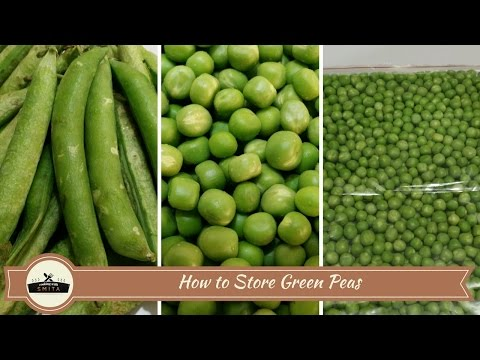 How to store Green Peas - 2 methods | Frozen Peas | Frozen Matar | Preserve Green Peas | फ्रोजन मटर