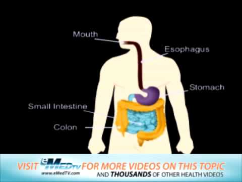 The Digestive System (ERCP)