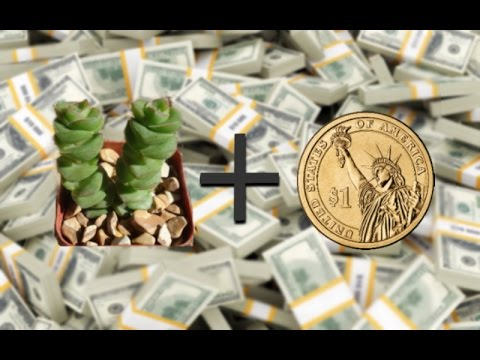 How Two Plant A Money Tree