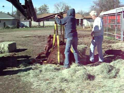 Horse Down-Neighbors Working Together
