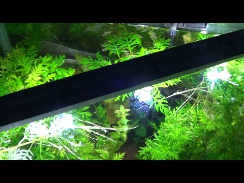Is LED lighting effective for photosynthesis?