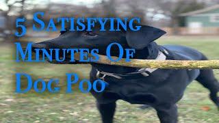5 Satisfying Minutes of Dog Poo