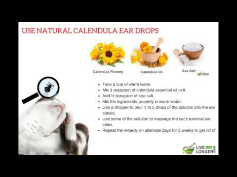 Proven Home Remedies For Ear Mites In Cats