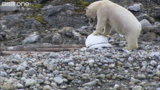 Polar bears smash the spy cams - Polar Bear: Spy On The Ice - BBC One