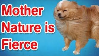 Mother Nature Is Fierce | Funny Animal Compilation