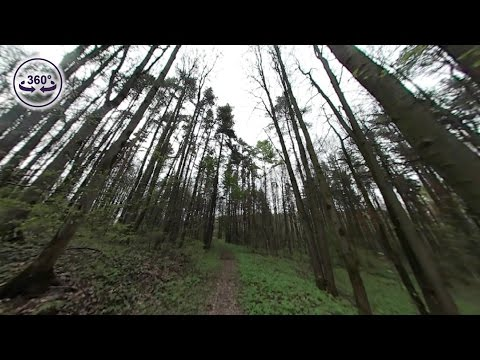 A few minutes footage from 360° spherical camera in forest