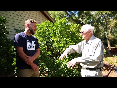 Citrus pruning with Ian Tolley