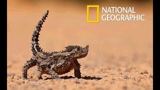 Wild Arabia - Hidden Deep in the Desert | Cold Blood (Nat Geo Wild)