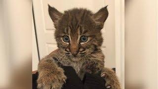 A woman rescued a kitten in Tennessee. But it wasn't a kitten