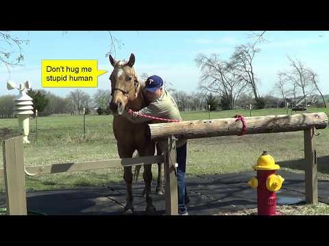 Winter Grooming - Horse Owner Etiquette Before Vet Visit - Cleaning Horse Ears