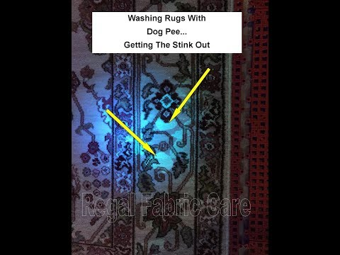 Washing A Rug With Dog Pee Part 1