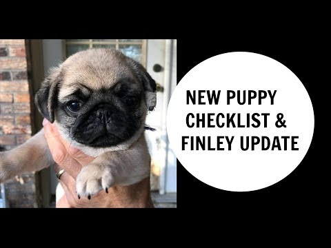 NEW Puppy checklist and Finley the Pug update