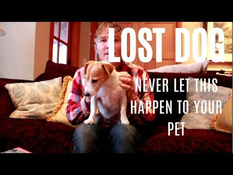 Lost Dog: Never Let This Happen To Your Pet