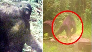 Real Life Bigfoot Captured On Trail Cam? | Bigfoot Caught On Tape