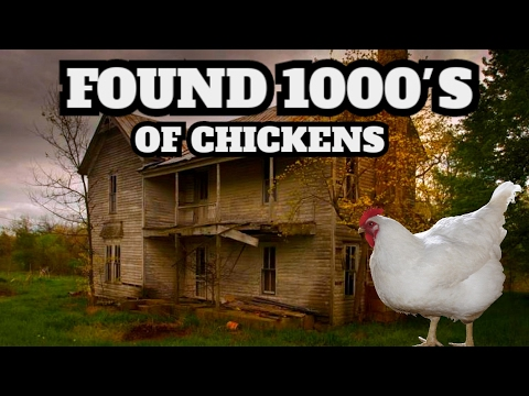 LOADS LEFT BEHIND! EXPLORING ABANDONED FARM HOUSE (FOUND LIVE CHICKENS)
