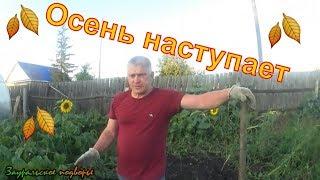 Начинаем убирать огород.Картофель.Тыквы.Кабачки. Деревенская жизнь